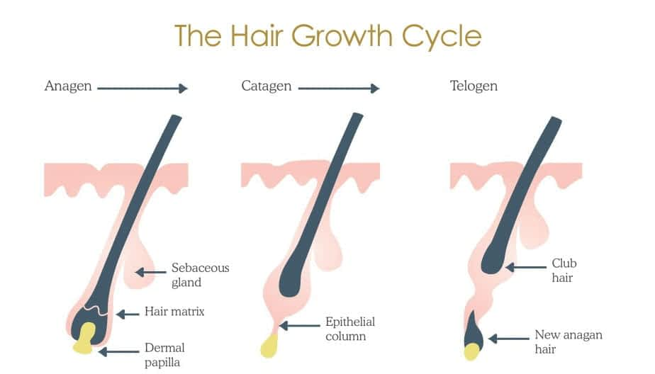 waxing in winter 3 stages of hair growth